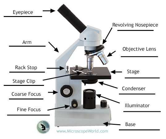 Microscope Parts and Use Worksheet Answer Key Along with Labeling the Parts Of the Microscope Blank Diagram Available for