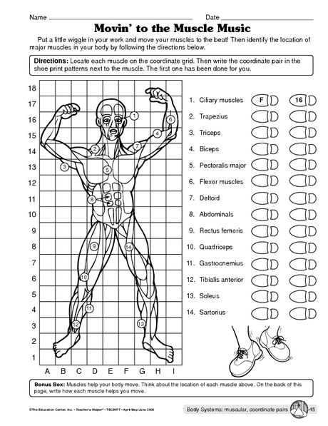 Muscular System Worksheet Answers with Free Teacher Websites for Worksheets Fresh Muscular System Worksheet
