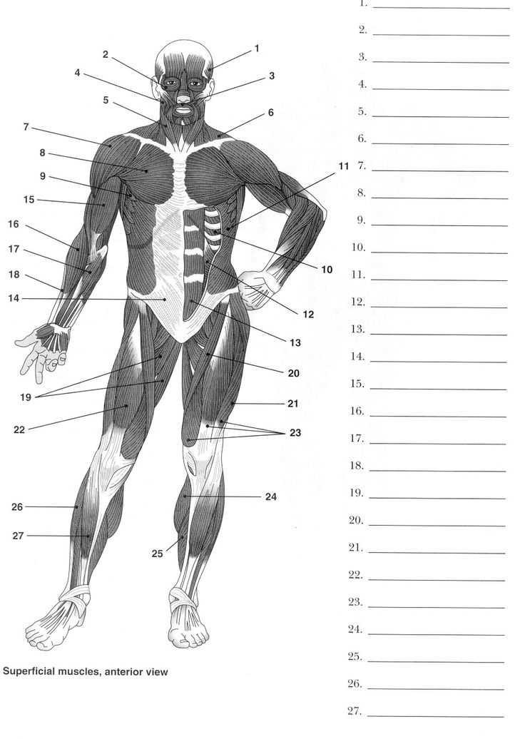 Muscular System Worksheet with 89 Best Worksheets and Quizzes Images On Pinterest