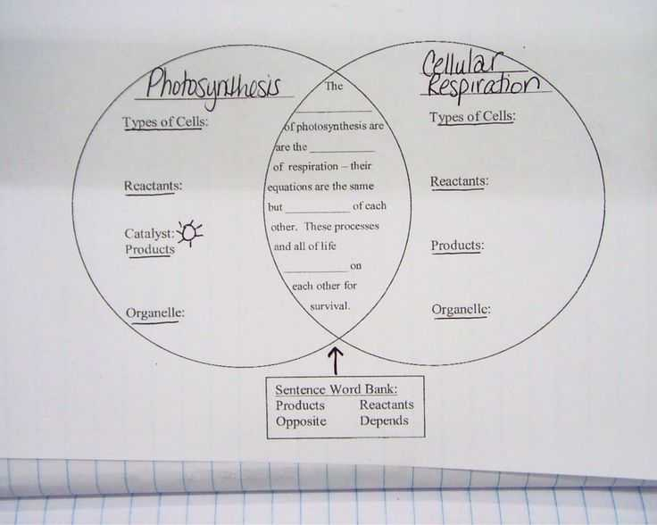 Photosynthesis Diagrams Worksheet Answers with 1873 Best Classroom Images On Pinterest
