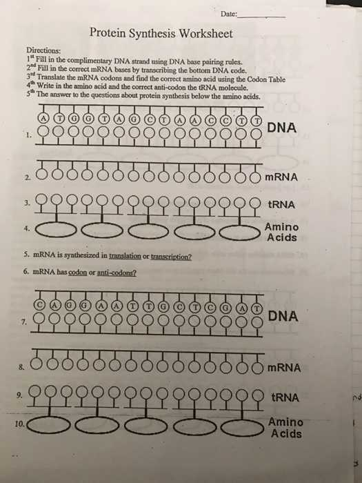 Protein Synthesis and Amino Acid Worksheet Answer Key as Well as Protein Synthesis Video