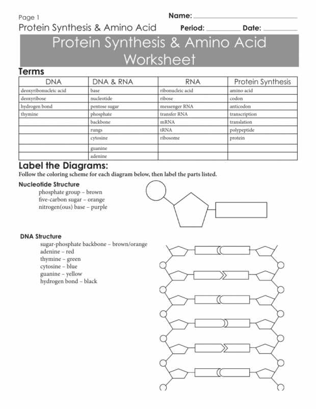 Protein Synthesis and Amino Acid Worksheet Answer Key as Well as Unique Transcription and Translation Worksheet Answers New Rna and