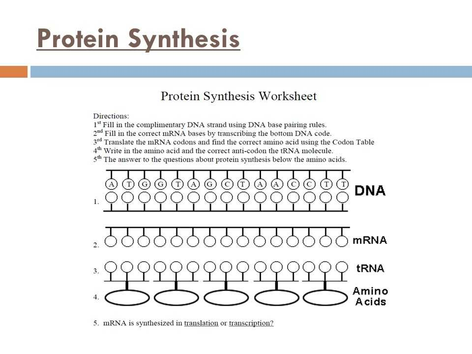 Protein Synthesis Review Worksheet Answers and Unique Transcription and Translation Worksheet Answers New Rna and
