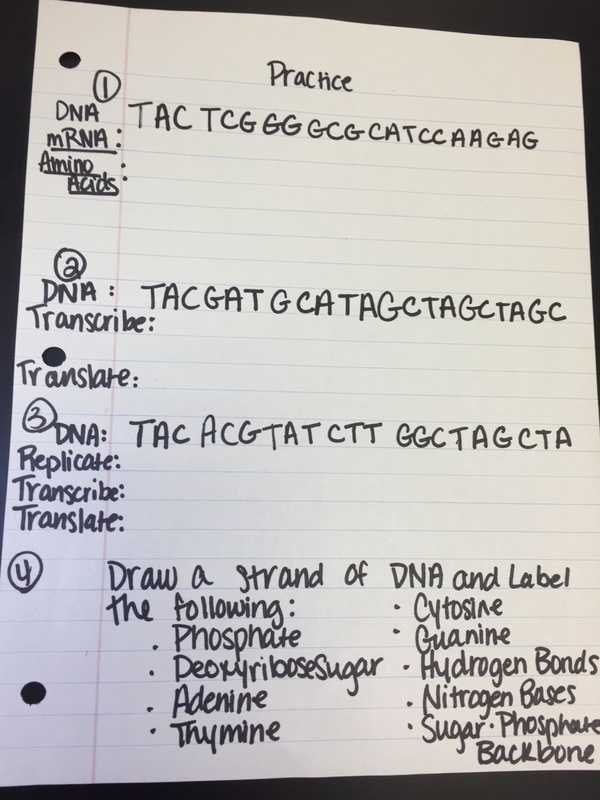 Rna Worksheet Answers as Well as 21 Luxury Worksheet Dna Rna and Protein Synthesis