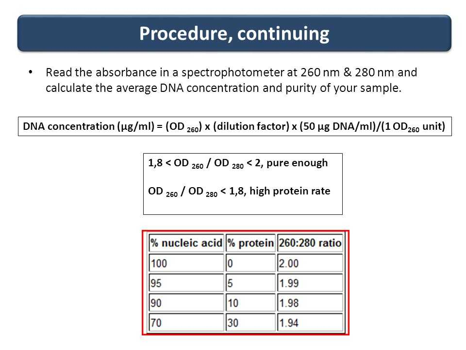 Strawberry Dna Extraction Lab Worksheet Also Extraction and Quantitation Of Dna From E Coli Ppt Video Online