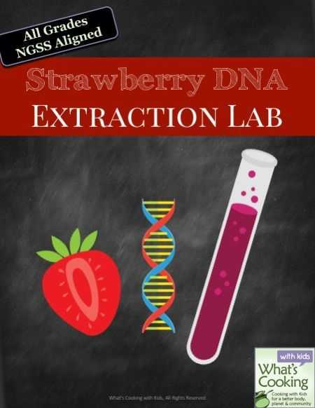 Strawberry Dna Extraction Lab Worksheet or Extract Dna From Strawberries Kitchen Science
