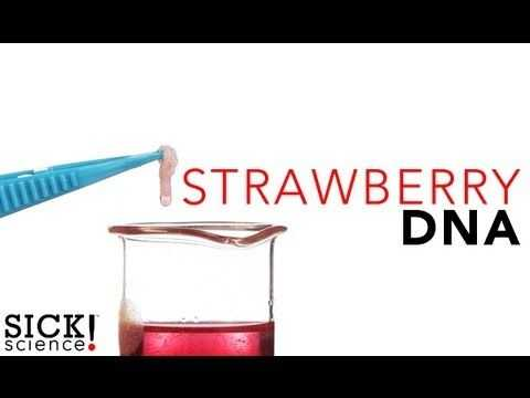 Strawberry Dna Extraction Lab Worksheet or How to Extract Dna From A Strawberry with Basic Kitchen Items