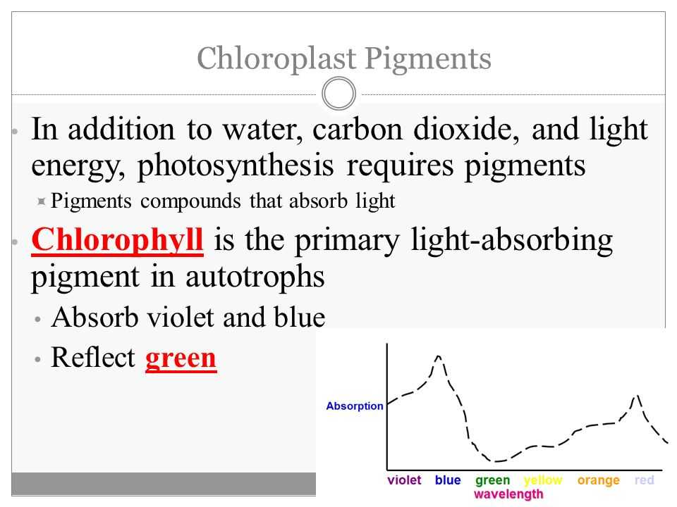 The Absorption Of Chlorophyll Worksheet Answers Along with Synthesis Making Energy Worksheet Answers Ace Energy