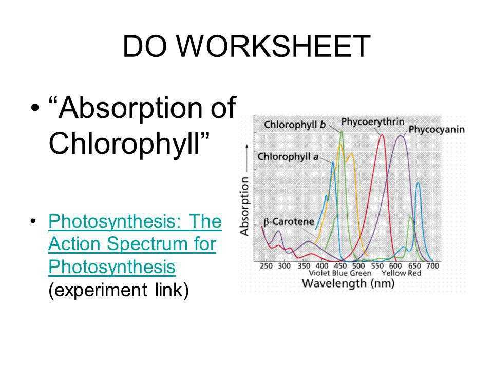 The Absorption Of Chlorophyll Worksheet Answers Also Using Light to Make Food Ppt
