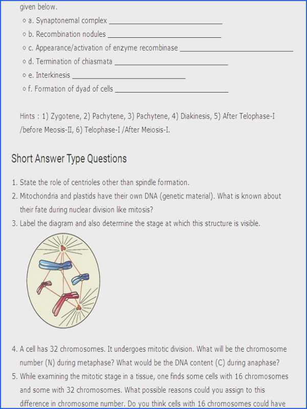 The Cell Cycle Coloring Worksheet Questions Answers Along with Cell Cycle Worksheet Answer Key Gallery Worksheet Math for Kids