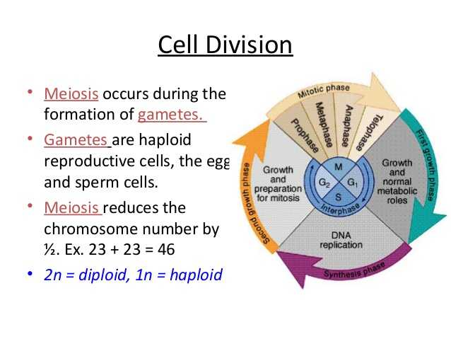 The Cell Cycle Coloring Worksheet Questions Answers Also Anatomy and Physiology Cell Transport and the Cell Cycle
