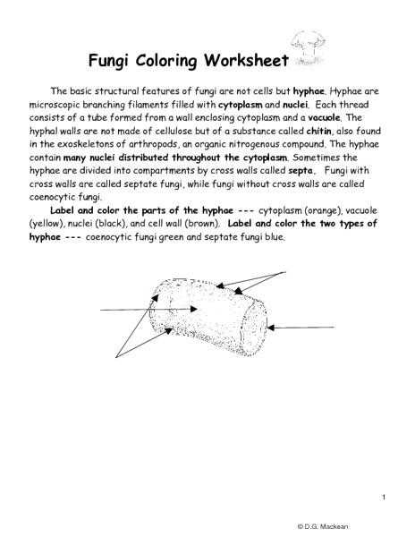 The Cell Cycle Coloring Worksheet Questions Answers as Well as 20 Fresh the Cell Cycle Coloring Worksheet Answers