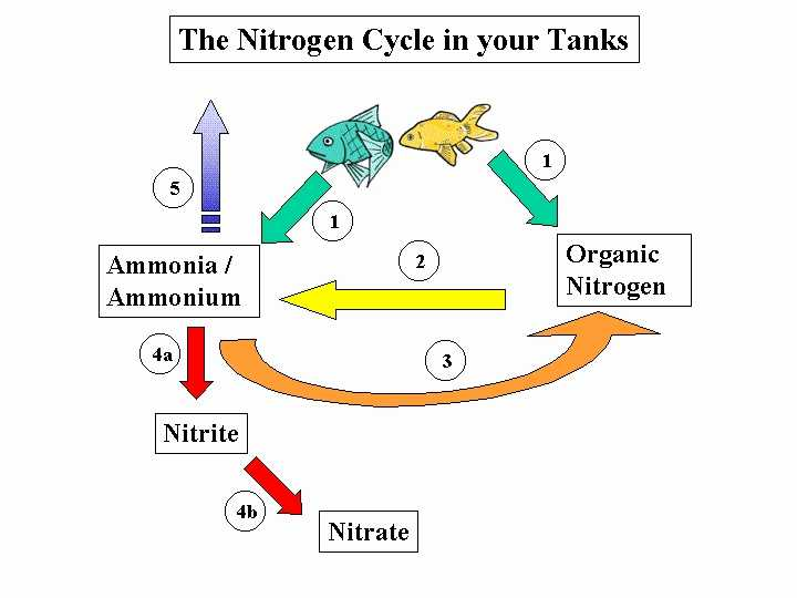 The Krebs Cycle Student Worksheet together with the Carbon Cycle Worksheet Answers Worksheet Math for Kids