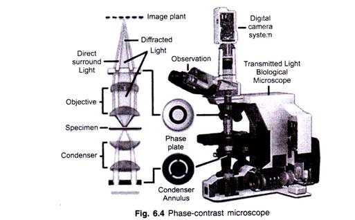 Using A Compound Light Microscope Worksheet with 5 Important Types Of Microscopes Used In Biology with Diagram