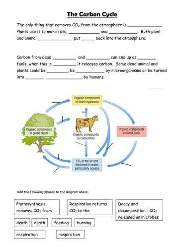 Water Carbon and Nitrogen Cycle Worksheet Answers with Carbon Cycle Prehension Worksheet Answers the Best Worksheets