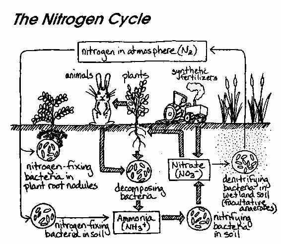 Water Carbon and Nitrogen Cycle Worksheet Color Sheet Also 130 Best Cc Cycle 2 Week 4 Images On Pinterest