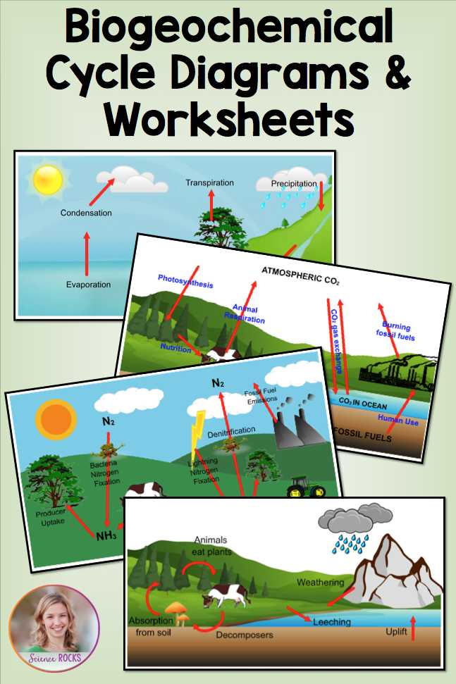 Water Carbon and Nitrogen Cycle Worksheet Color Sheet and Biogeochemical Cycles Worksheets
