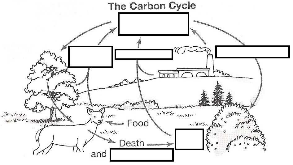 Water Carbon and Nitrogen Cycle Worksheet Color Sheet or Wizer Free Interactive Carbon Cycle Biology Cycles Blended