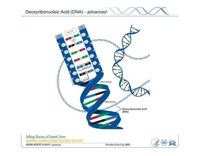 Worksheet On Dna Rna and Protein Synthesis Answer Key Quizlet with 18 New Pics Protein Synthesis and Amino Acid Worksheet