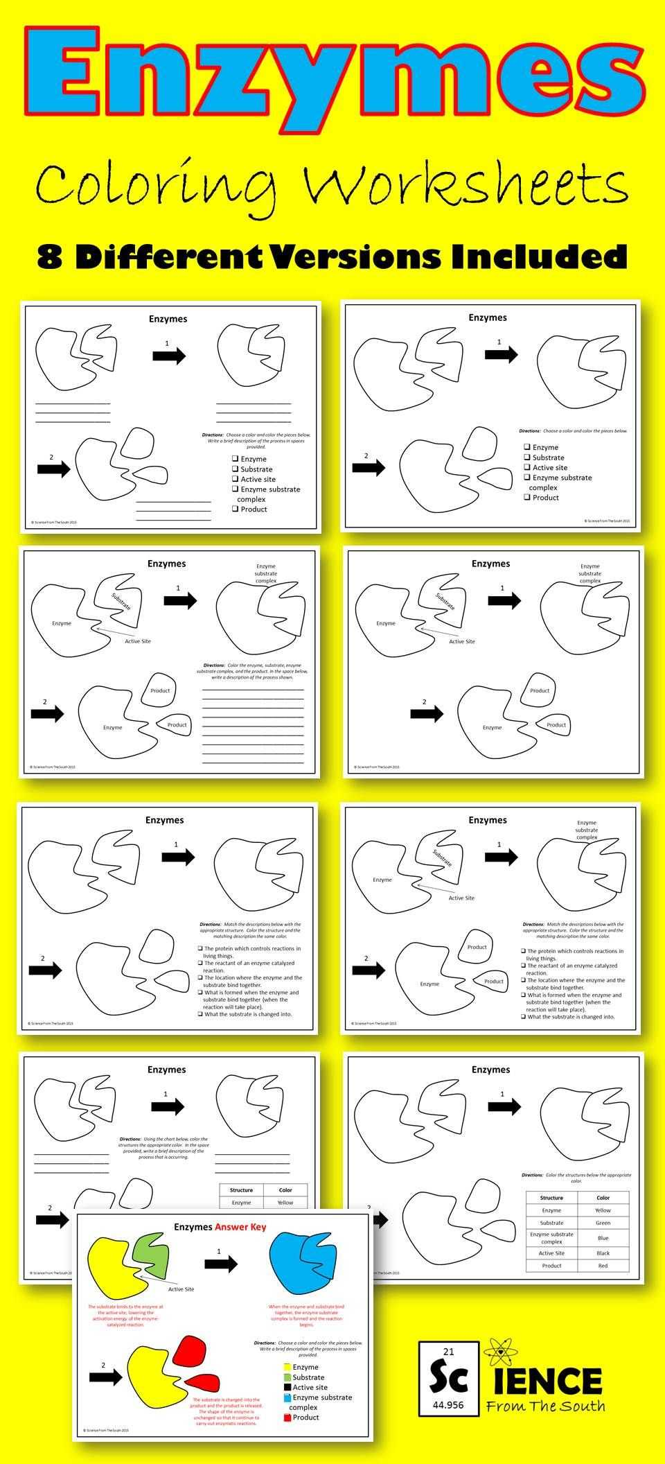 Amoeba Sisters Video Recap Biomolecules Worksheet Answers Along with Amoeba Sisters Enzymes Worksheet Key