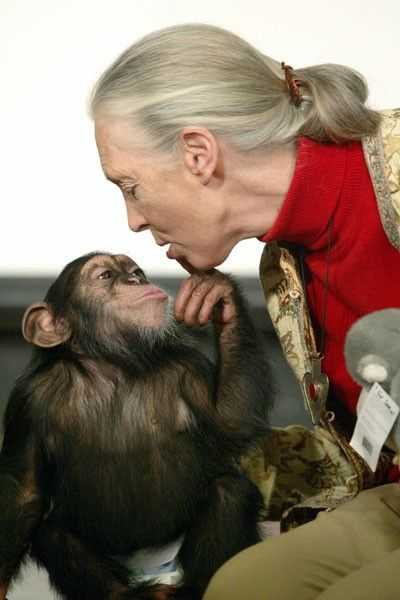 Among the Wild Chimpanzees Worksheet Answers Along with 87 Best Jane Goodall I Admire Her Images On Pinterest