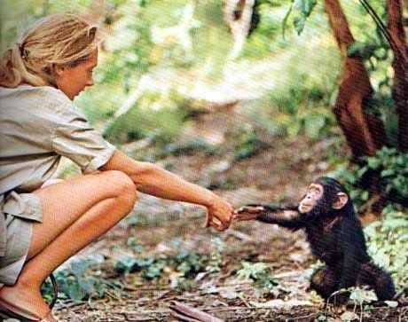Among the Wild Chimpanzees Worksheet Answers and 32 Best Jane Goodall Images On Pinterest