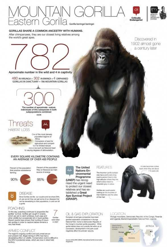 Among the Wild Chimpanzees Worksheet Answers as Well as 47 Best Homeschool Primate Unit Study Science Images On