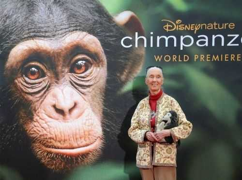 Among the Wild Chimpanzees Worksheet Answers or 34 Best Jane Goodall Images On Pinterest
