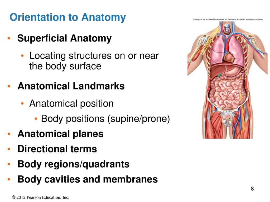 Anatomy and Physiology Worksheets together with An Introduction to Anatomy and Physiology Ppt