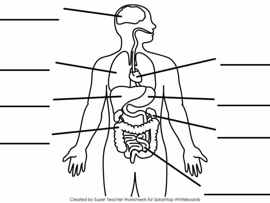 Anatomy and Physiology Worksheets with Index Of Wpcontent