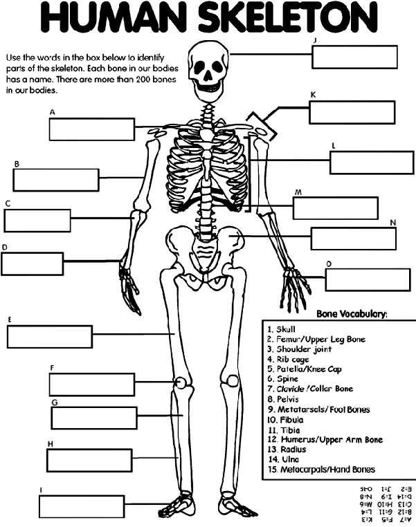 Body Image Worksheets together with 113 Best Human Body Unit Study Images On Pinterest