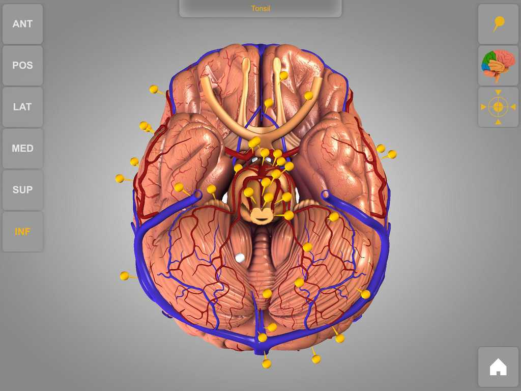 Brain Lab Worksheet Together With Free Brain Break Clipart