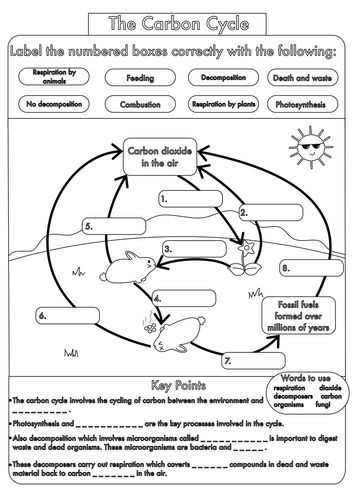 Carbon Cycle Worksheet Answers Along with Carbon Cycle Worksheet Fill In the Blanks Awesome Cellular