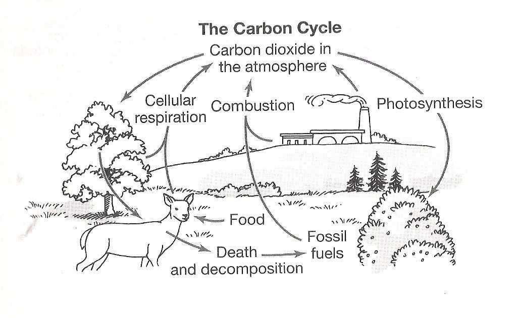 Carbon Cycle Worksheet as Well as Carbon Cycle Coloring Page Best Carbon Cycle the Free