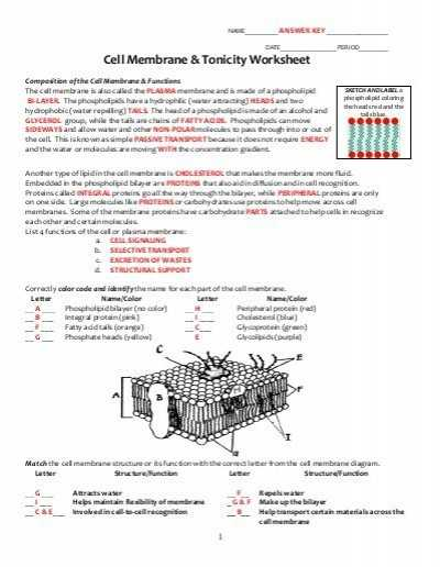 Cell Membrane Worksheet with Cell Membrane Diagram Worksheet Awesome Key Cell Membrane and