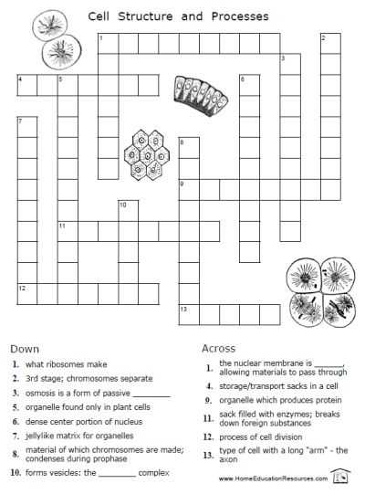 Cell Structure and Processes Worksheet Answers Along with Free Cells Worksheets 12 Pages Easy to From
