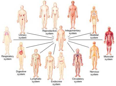 Cells Tissues organs organ Systems Worksheet and 10 Snc2 P Snc2 D Biology Tissue organs & Systems Living Things