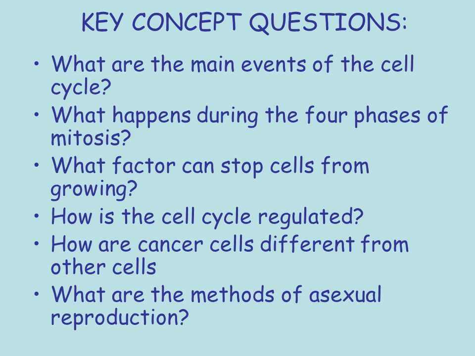 Chapter 10 Cell Growth and Division Worksheet Answer Key Also Chapter 10 Cell Growth and Regulation and A Ual Reproduction