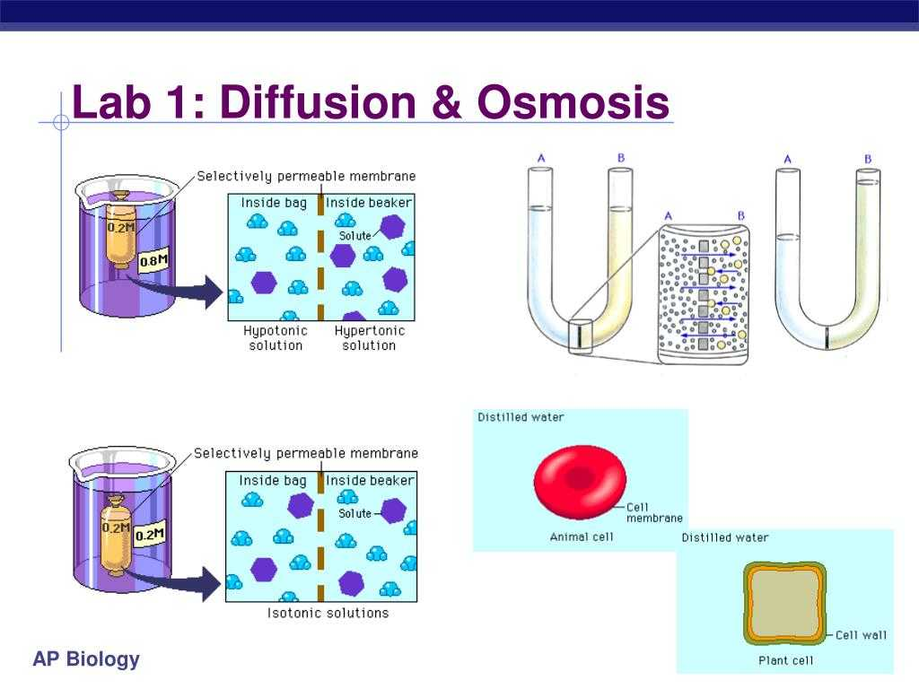 Diffusion and Osmosis Worksheet Answers Biology together with Punjabi In Gurmukhi Font