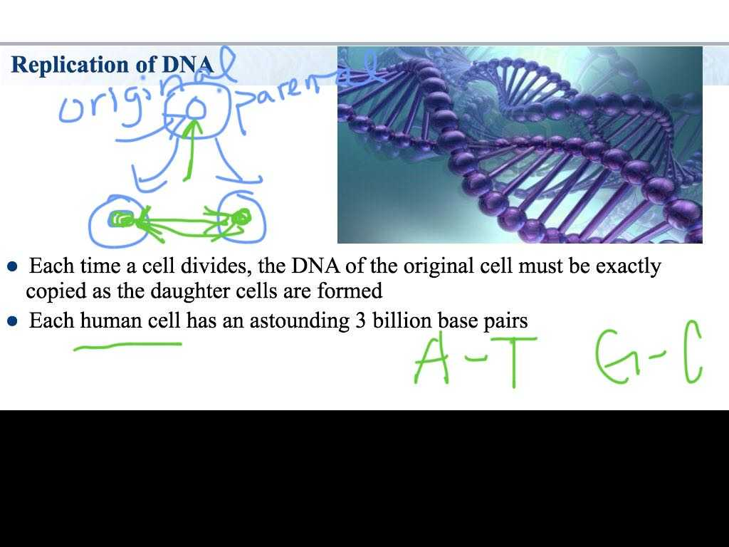 Dna the Double Helix Coloring Worksheet Key and Heather forrester Public Profile Bcontext
