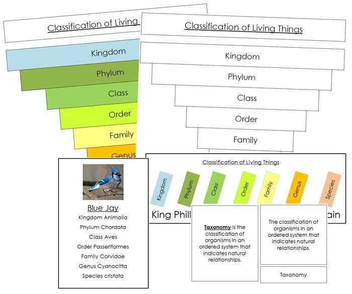 Domains and Kingdoms Worksheet Also Six Kingdoms Classification Chart Thinkpawsitive