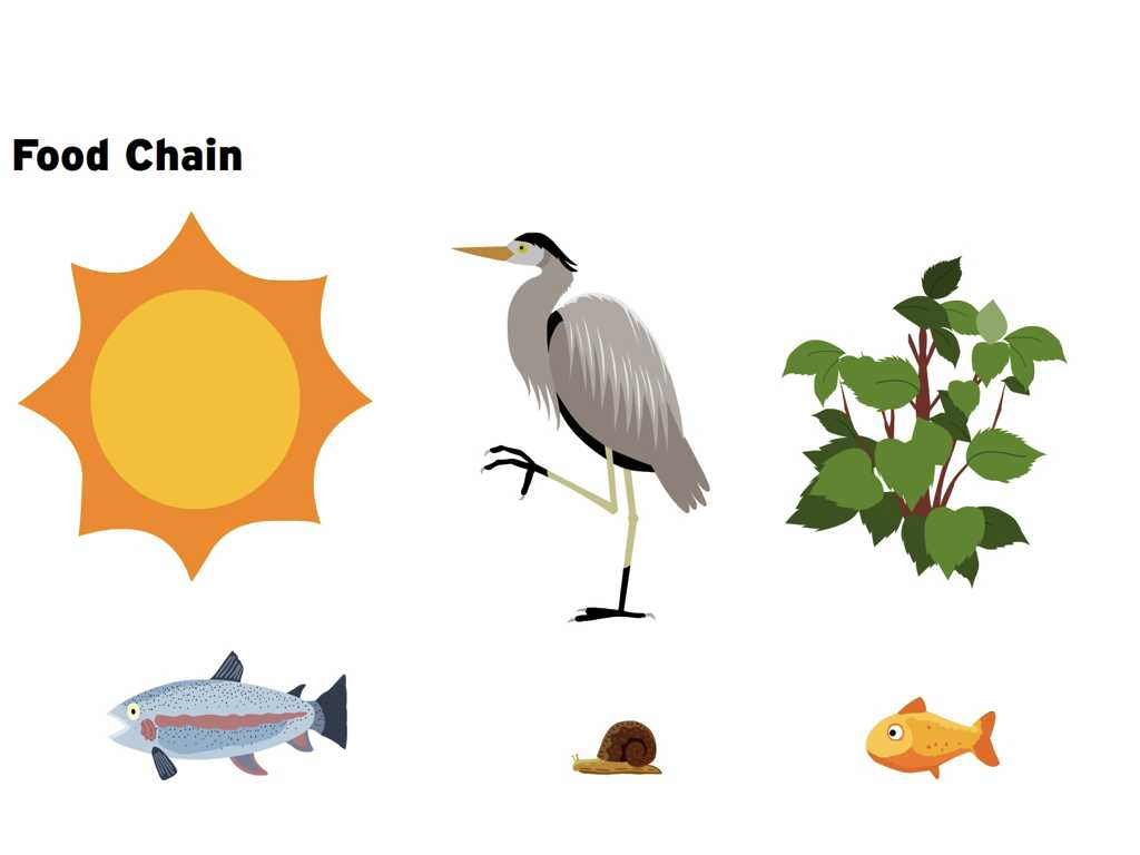Energy Flow In Ecosystems Worksheet Also Food Chain Clipart Clip Art Guru