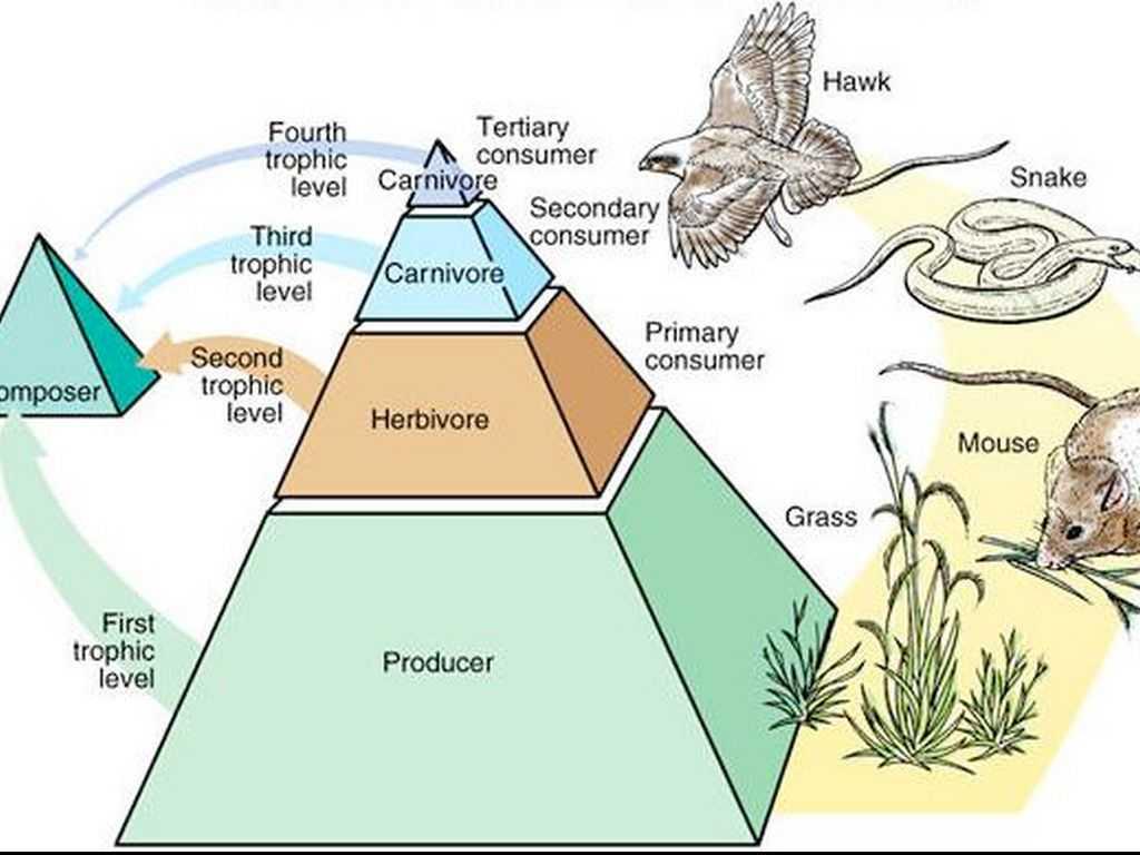 Energy Pyramid Worksheet