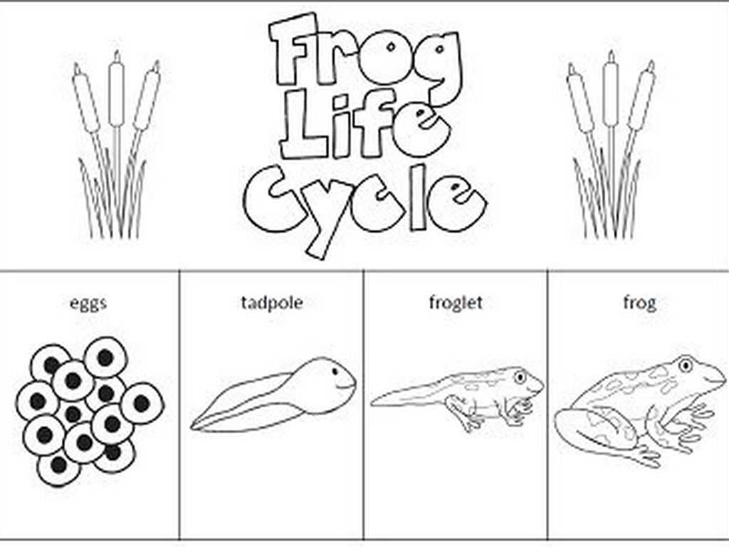 Frog Dissection Worksheet as Well as Worksheets Frog Life Cycle Worksheet Eurokaclira Free Work