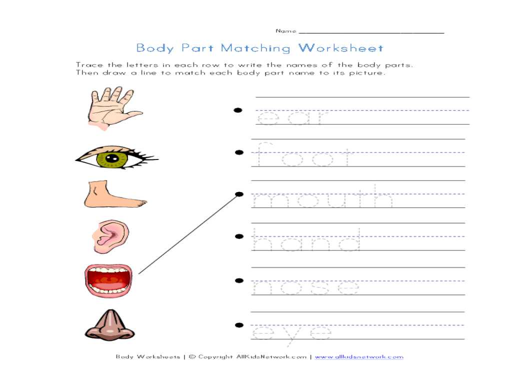 Heat Transfer Activity Worksheet Also Free Printable Body Parts Matching Worksheet Goodsnyc