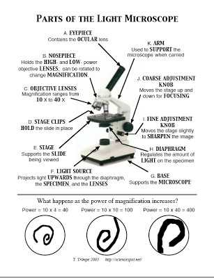 Microscope Parts and Use Worksheet Answers with Microscope Parts and Functions Worksheet the Best Worksheets Image