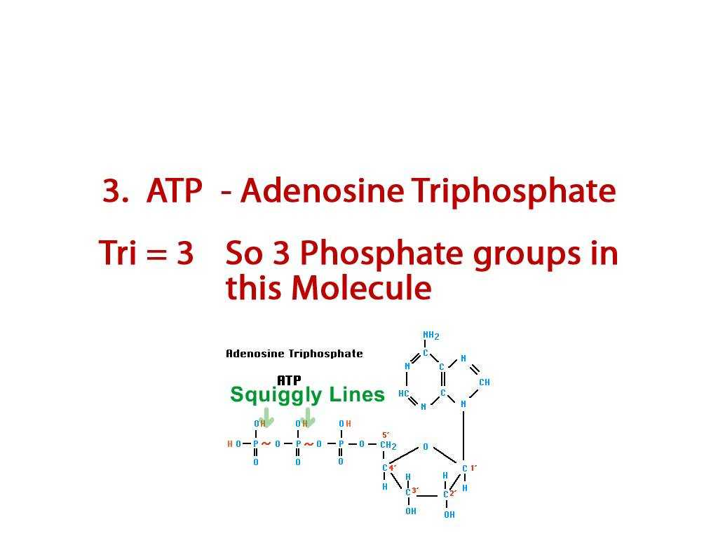 Nucleic Acids and Protein Synthesis Worksheet Answer Key and Bcln Adenosine Triphosphate Biology