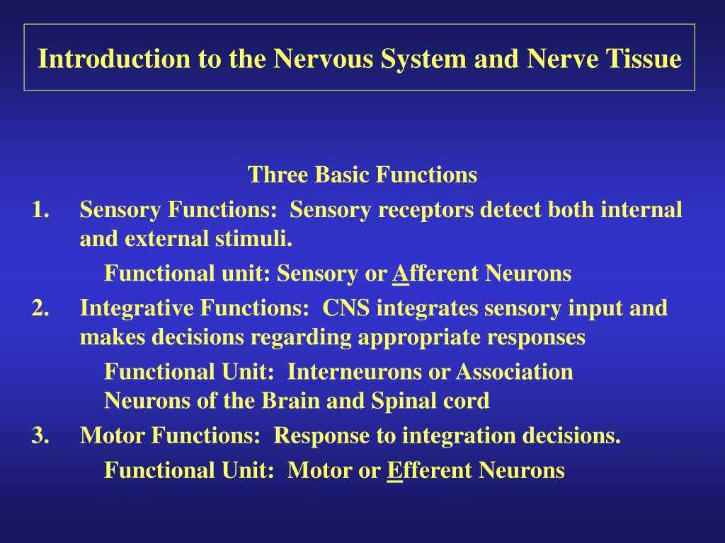 Organization Of the Nervous System Worksheet Answers with Ppt Introduction to the Nervous System and Nerve Tissue Po