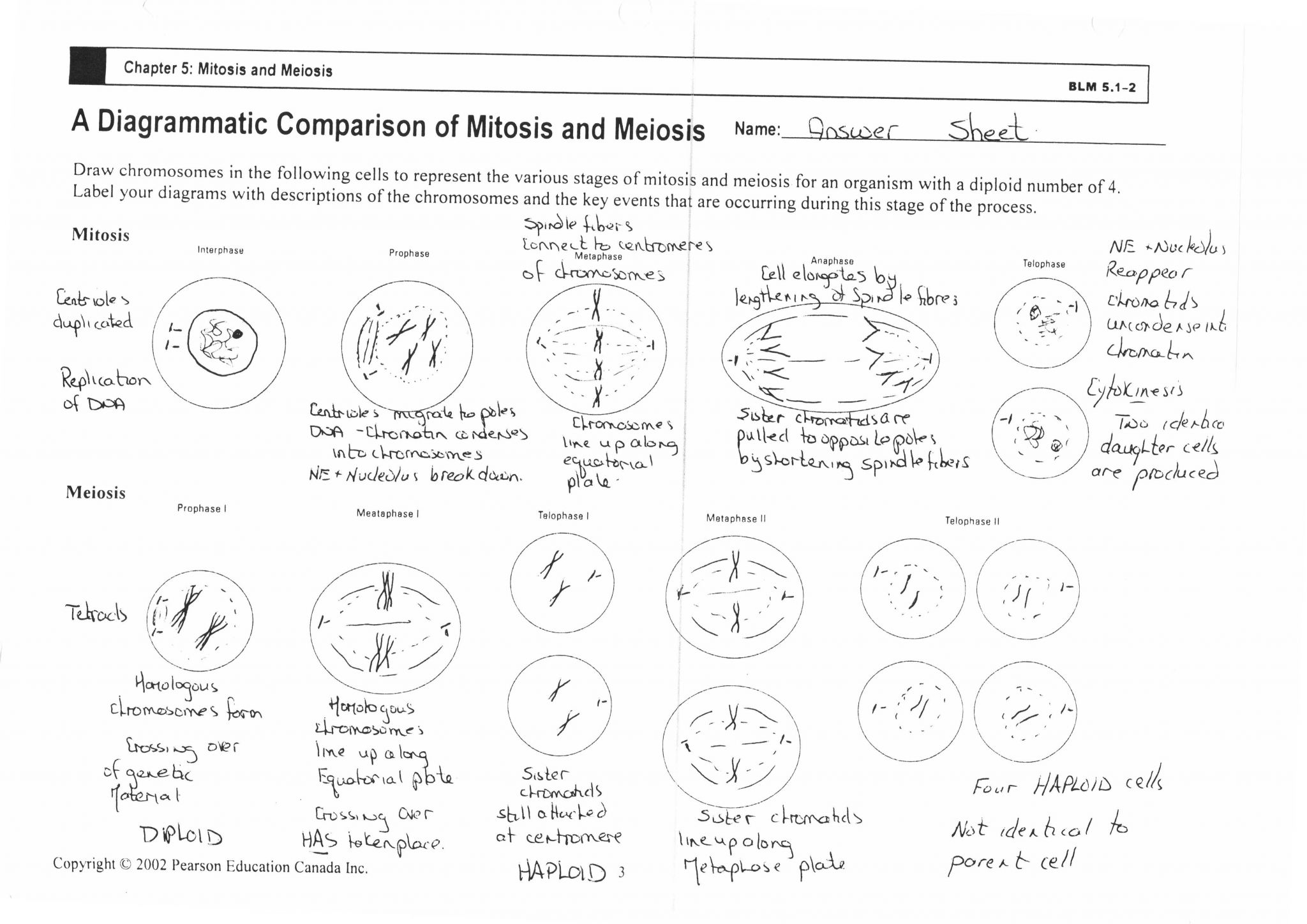 Pearson Education Inc Worksheet Answers and Mitosis Worksheet Answers Choice Image Worksheet for Kids In English