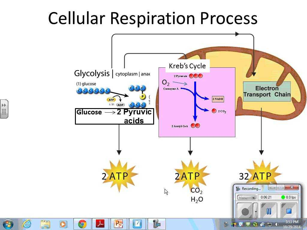 Photosynthesis & Cellular Respiration Worksheet Answers as Well as Synthesis and Respiration Search Results solo K